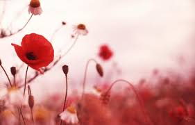 Remembrance Day Ceremony Video